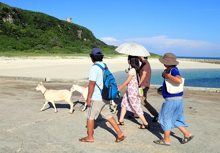 宮古島ひとときさんぽツアー「来間島やぎさんぽ」画像提供:プラネット・フォー